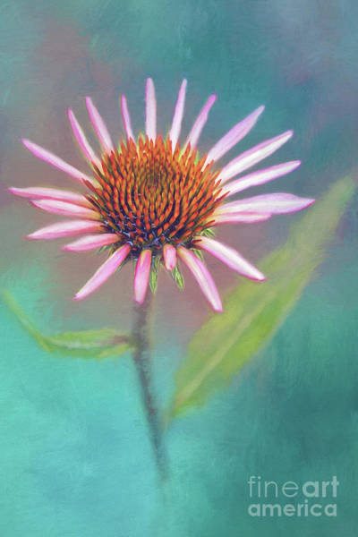 Wall Art - Photograph - Pink Coneflower On Blue by Sharon McConnell