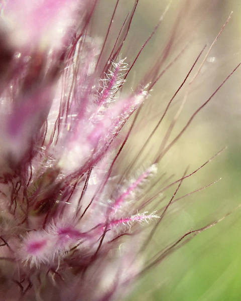 Photograph - Pink Cotton Candy by Michael Van Huffel
