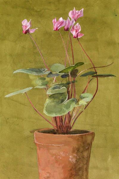 Wall Art - Painting - Pink Cyclamen, 1875 by Fidelia Bridges