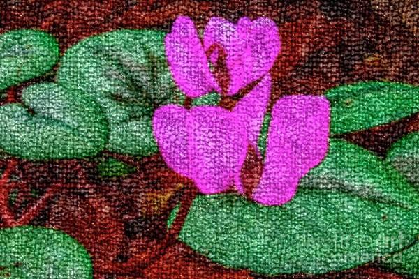 Photograph - Pink Cyclamen by Nigel Dudson