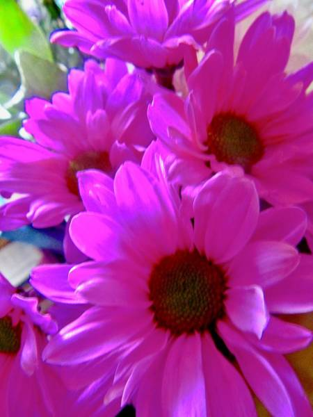 Photograph - Pink Daisies by Stephanie Moore