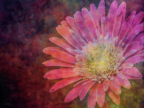 Photograph - Pink Daisy 4938 Idp_2 by Steven Ward