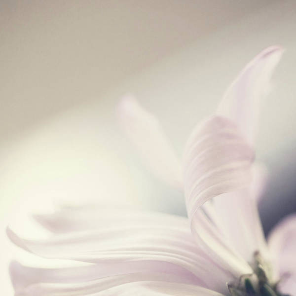 Photograph - Pink Daisy by Leanne Godbey