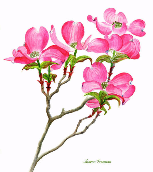 Dogwood Painting - Pink Dogwood Array Vertical Design by Sharon Freeman