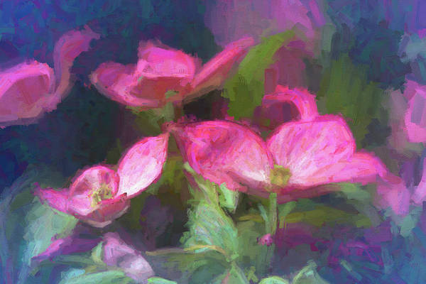 Painting - Pink Dogwood Flowers Painted by Debbie Lund