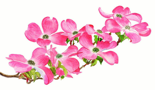 Dogwood Painting - Pink Dogwood On A Branch, Horizontal Design by Sharon Freeman