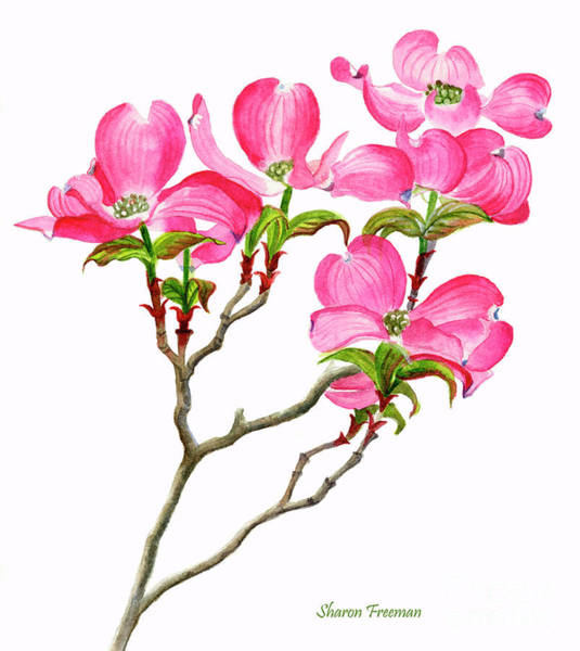 Dogwood Painting - Pink Dogwood Vertical Design by Sharon Freeman
