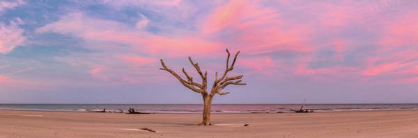 Photograph - Pink Dreamland  by Emmanuel Panagiotakis