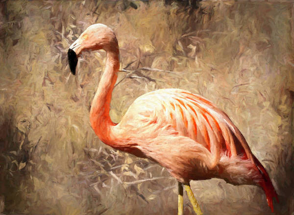 Wall Art - Photograph - Pink Flamingo Painted by Judy Vincent