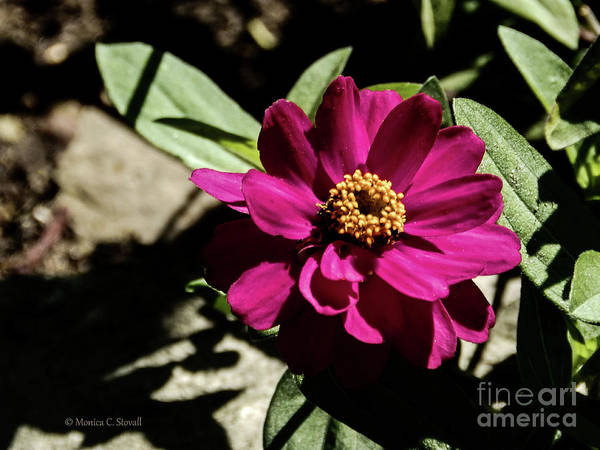 Photograph - Pink Flower No. 81 by Monica C Stovall