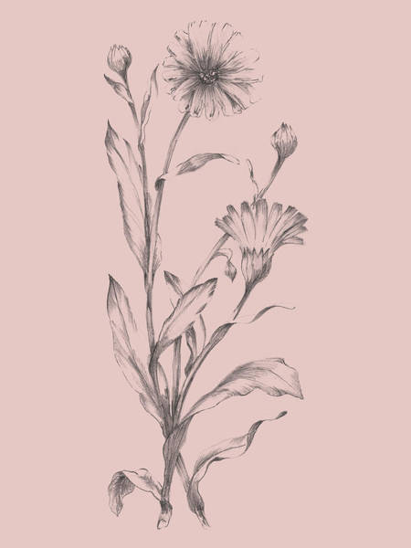Wall Art - Mixed Media - Pink Flower Sketch Illustration IIi by Naxart Studio