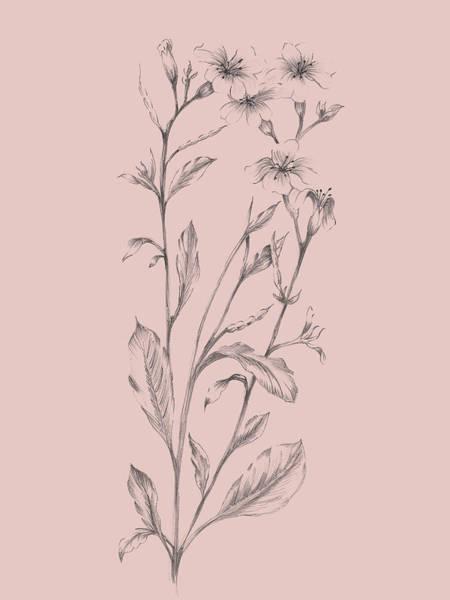 Wall Art - Mixed Media - Pink Flower Sketch Illustration by Naxart Studio