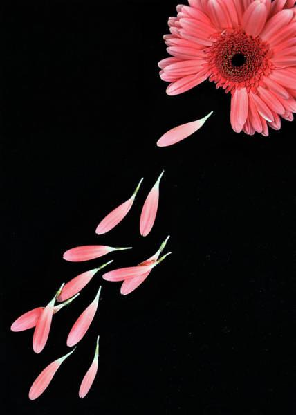 Love Photograph - Pink Flower With Petals by Photo By Bhaskar Dutta
