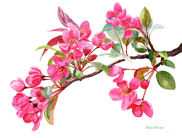 Blooming Tree Painting - Pink Flowering Tree Blossoms by Sharon Freeman