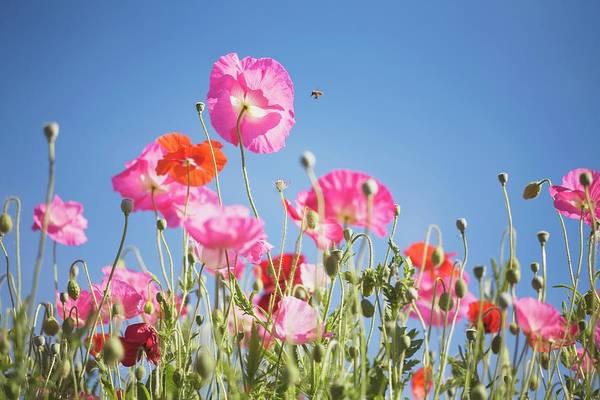 Snow Photograph - Pink Flowers Against Blue Sky by Design Pics/craig Tuttle