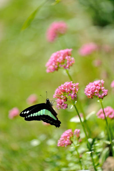 Insect Photograph - Pink Flowers by Myu-myu