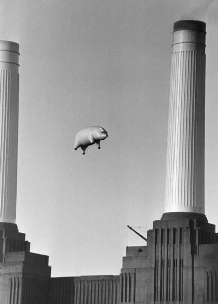 Pig Photograph - Pink Floyds Pig by Keystone