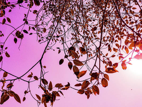Photograph - Pink Glow by AE collections