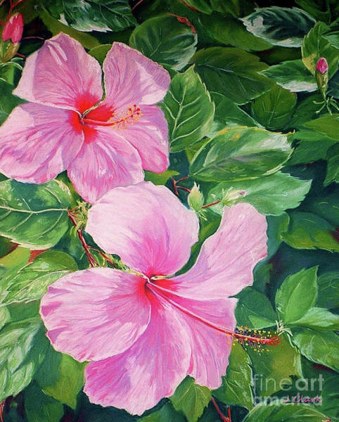 Wall Art - Painting - Pink Hibiscus by John Clark