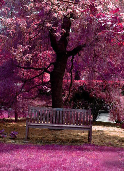 Park Bench Digital Art - Pink In The Park by Artistocratic Space