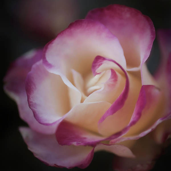 Photograph - Pink Kiss By Tl Wilson Photography  by Teresa Wilson