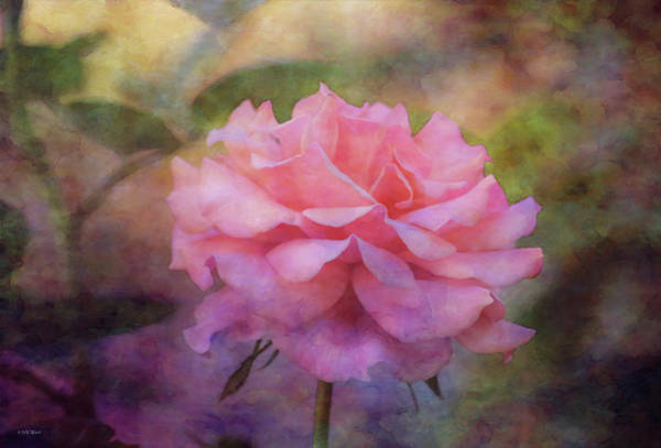 Photograph - Pink Layers 5563 Idp_2 by Steven Ward