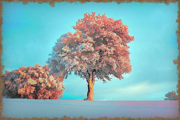Wall Art - Painting - Pink Leaved Tree During Daytime, C2019 After Van Gogh By Adam Asar by Adam Asar