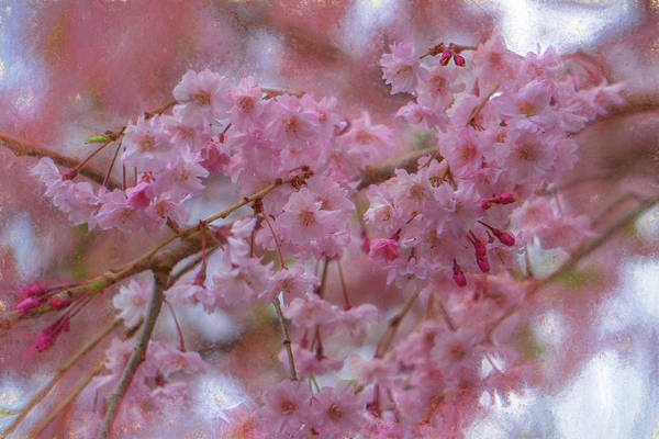 Digital Art - Pink Magnolia Blooming by Jason Fink