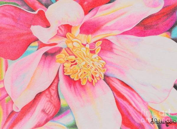 Wall Art - Drawing - Pink Magnolia by Sharon Patterson