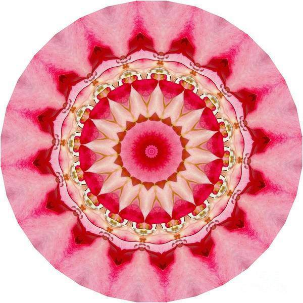 Digital Art - Pink Mandala by Susan Rydberg