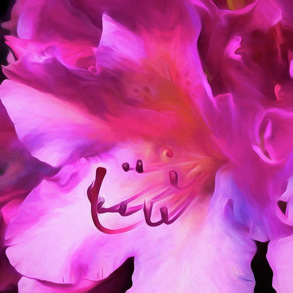 Digital Art - Pink O'keefe by Cindy Greenstein