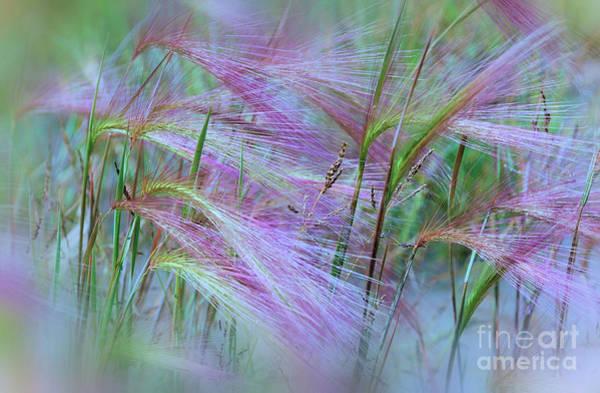 Wall Art - Photograph - Pink Ornamental Grass by Elaine Manley