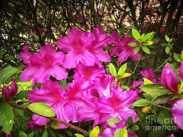 Pink Outside Art Print