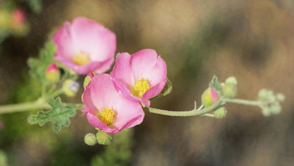 Wall Art - Photograph - Pink Penstemon Trio  by Saija Lehtonen