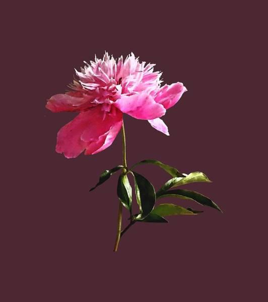 Photograph - Pink Peony Profile by Susan Savad