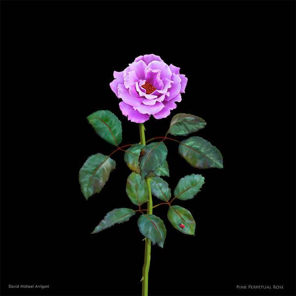 Painting - Pink Perpetual Rose by David Arrigoni