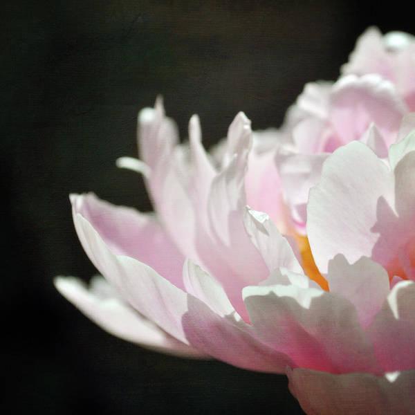 Randle Photograph - Pink Petals by Photo - Lyn Randle