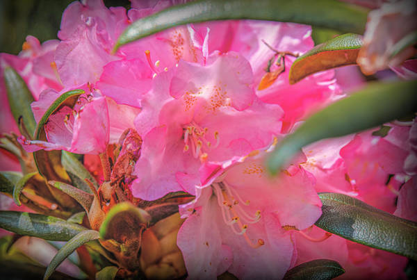 Wall Art - Photograph - Pink Pink Pink #i8 by Leif Sohlman