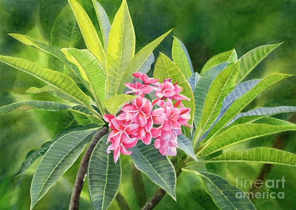 Wall Art - Painting - Pink Plumeria Flowers With Leaves Full by Sharon Freeman