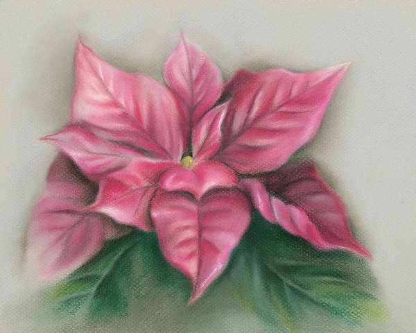 Pastel - Pink Poinsettia by MM Anderson