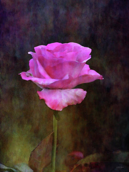 Photograph - Pink Rose 5497 Idp_2 by Steven Ward