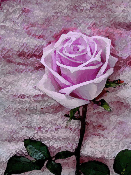 Photograph - Pink Rose by Corinne Carroll