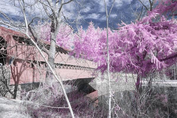 Pink Sachs Art Print