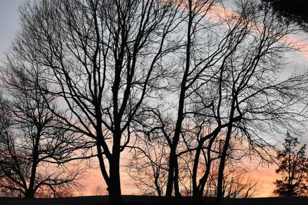 Tree Wall Art - Photograph - Pink Sky by Cassidy Marshall