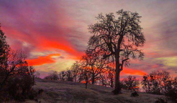 Photograph - Pink Sunrise by Jonathan Hansen