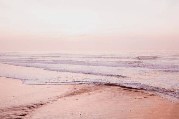 Wall Art - Photograph - Pink Sunset by Bonnie Bruno