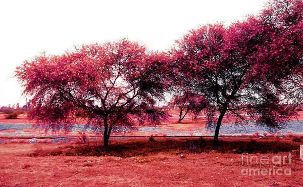 Park Bench Digital Art - Pink Trees by Anita Morya