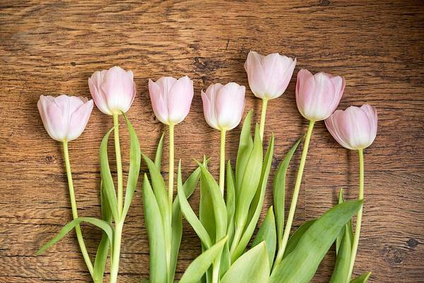 Photograph - Pink Tulips by Top Wallpapers