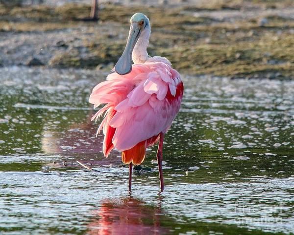 Photograph - Pink Tutu by Susan Rydberg