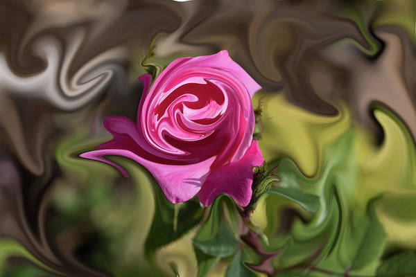 Photograph - Pink Warped Rose by Jennifer Grossnickle